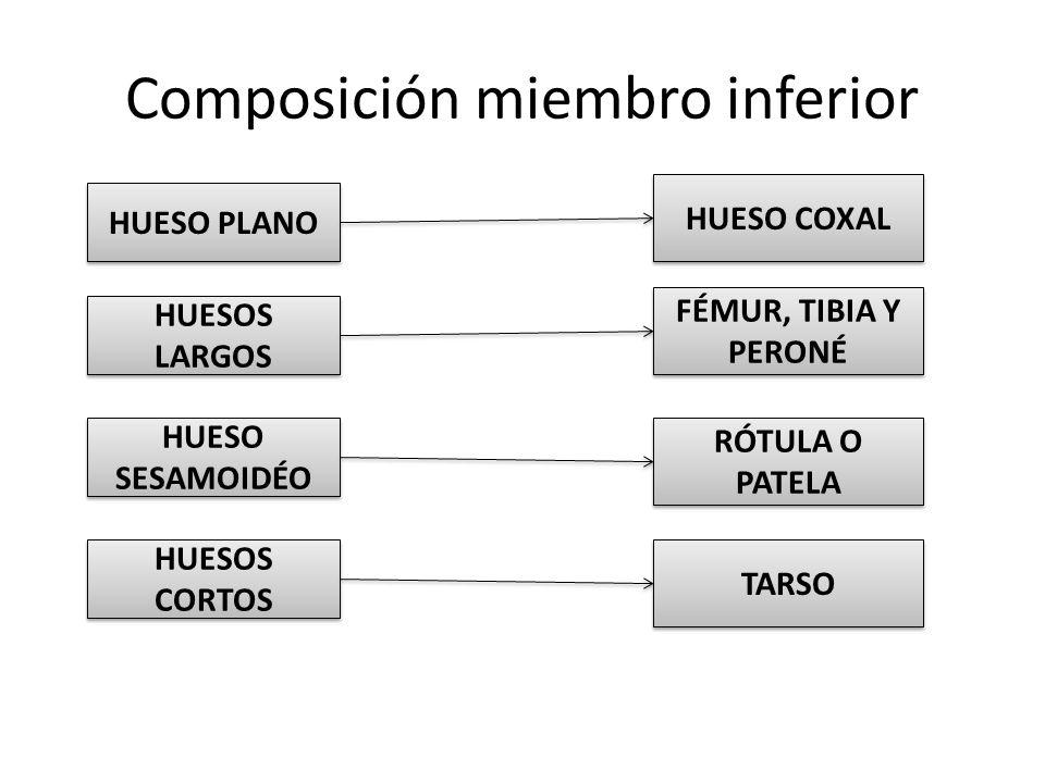 Composición miembro inferior