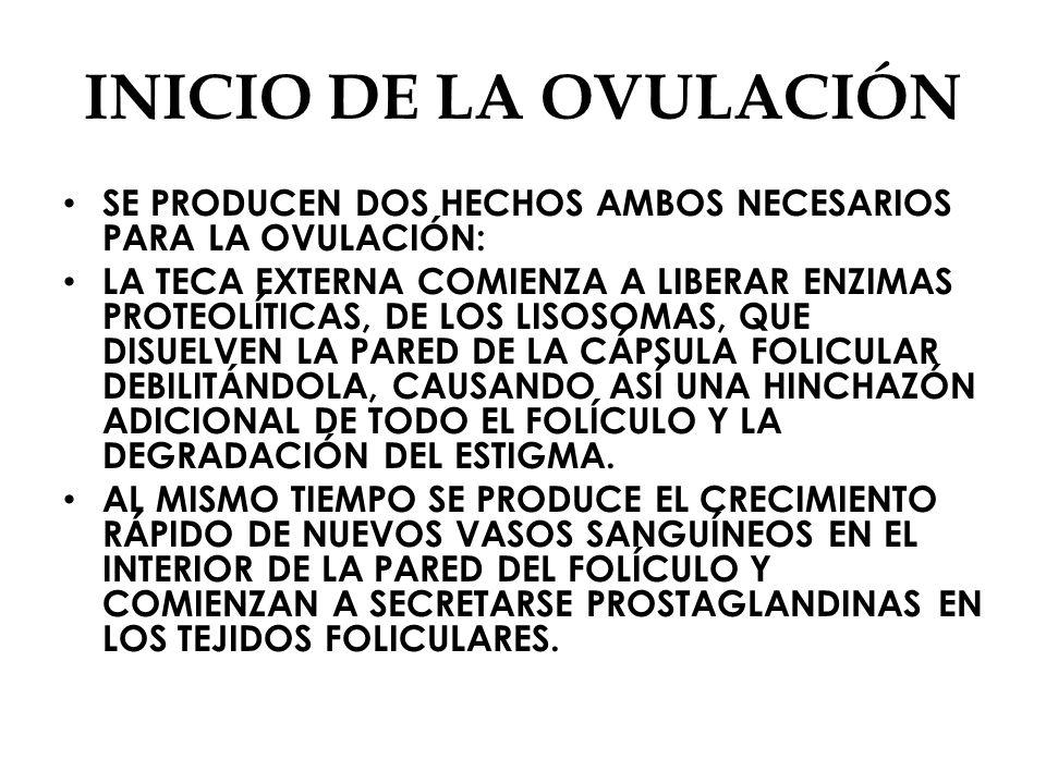 INICIO DE LA OVULACIÓN SE PRODUCEN DOS HECHOS AMBOS NECESARIOS PARA LA OVULACIÓN: