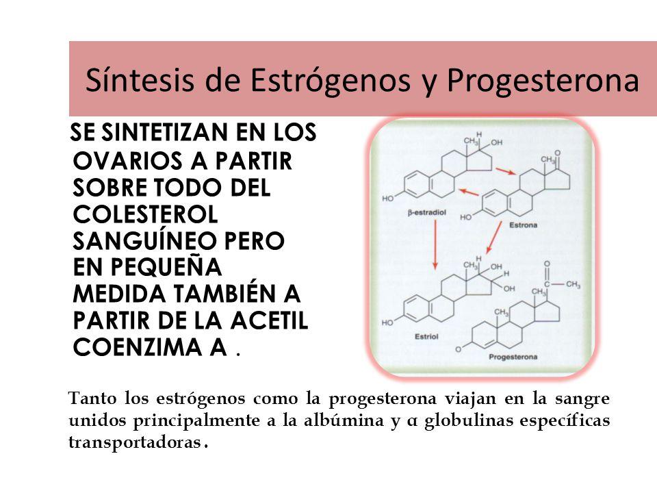 Síntesis de Estrógenos y Progesterona
