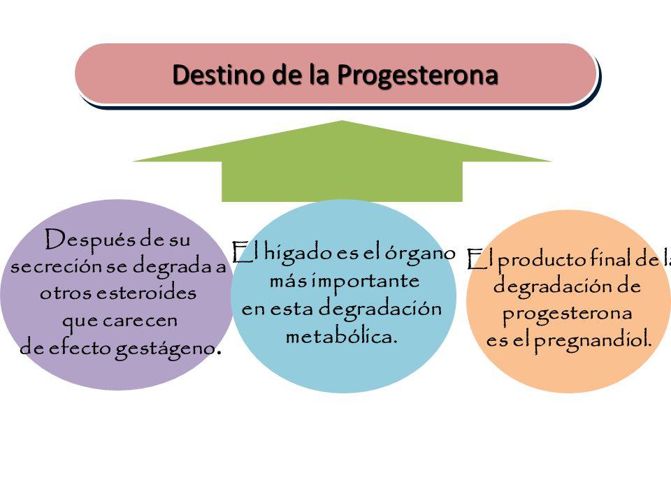 Destino de la Progesterona