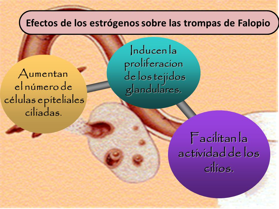 Inducen la proliferacion actividad de los cilios.