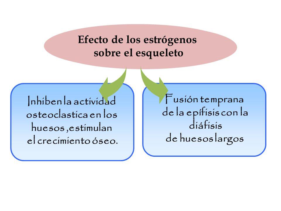 Efecto de los estrógenos