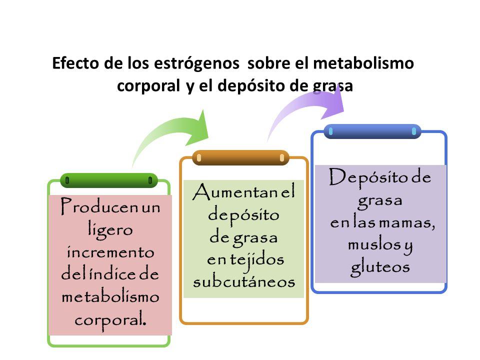 Efecto de los estrógenos sobre el metabolismo