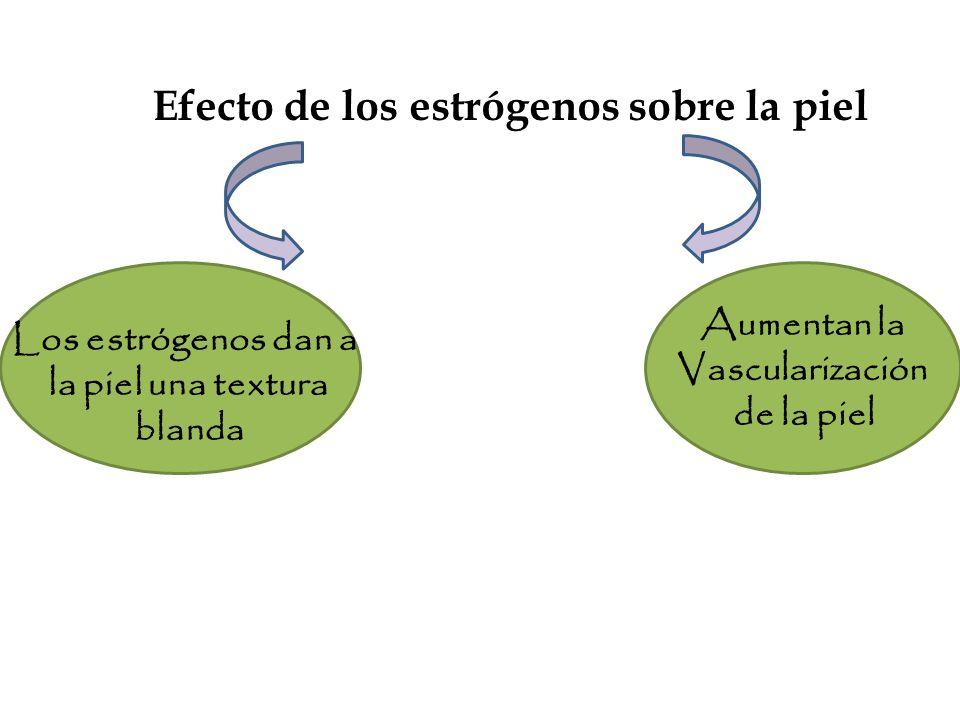 Efecto de los estrógenos sobre la piel