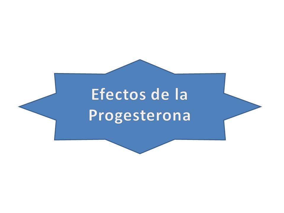 Efectos de la Progesterona