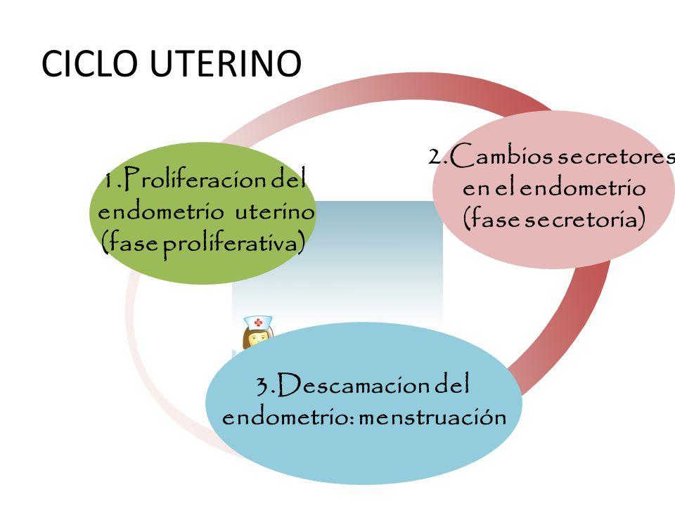 endometrio: menstruación