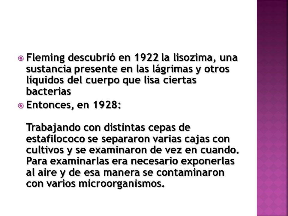 Fleming descubrió en 1922 la lisozima, una sustancia presente en las lágrimas y otros líquidos del cuerpo que lisa ciertas bacterias