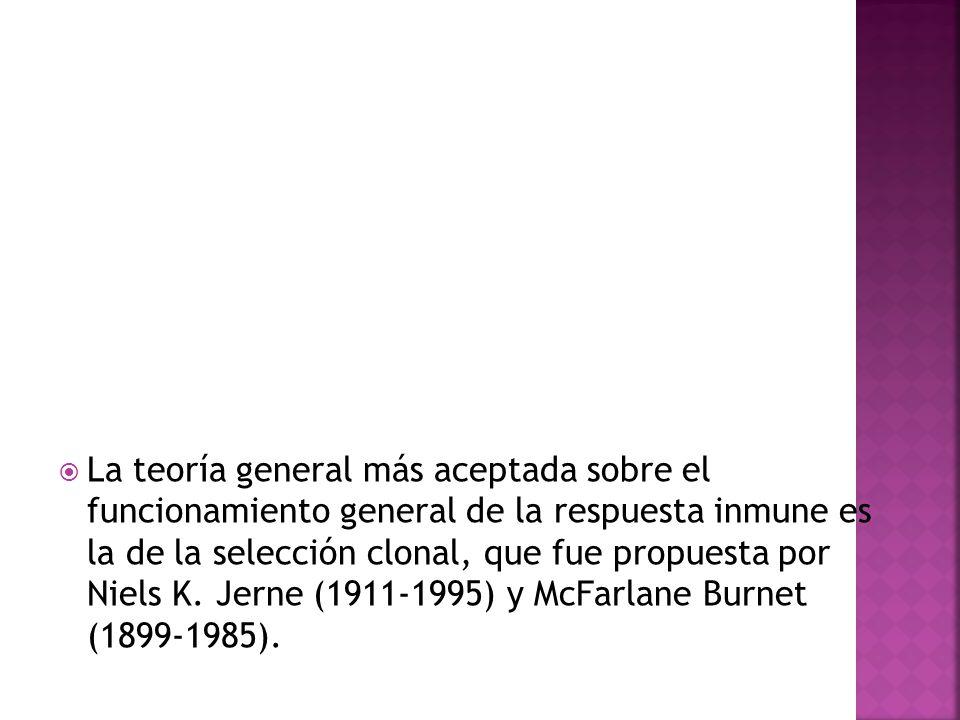 La teoría general más aceptada sobre el funcionamiento general de la respuesta inmune es la de la selección clonal, que fue propuesta por Niels K.