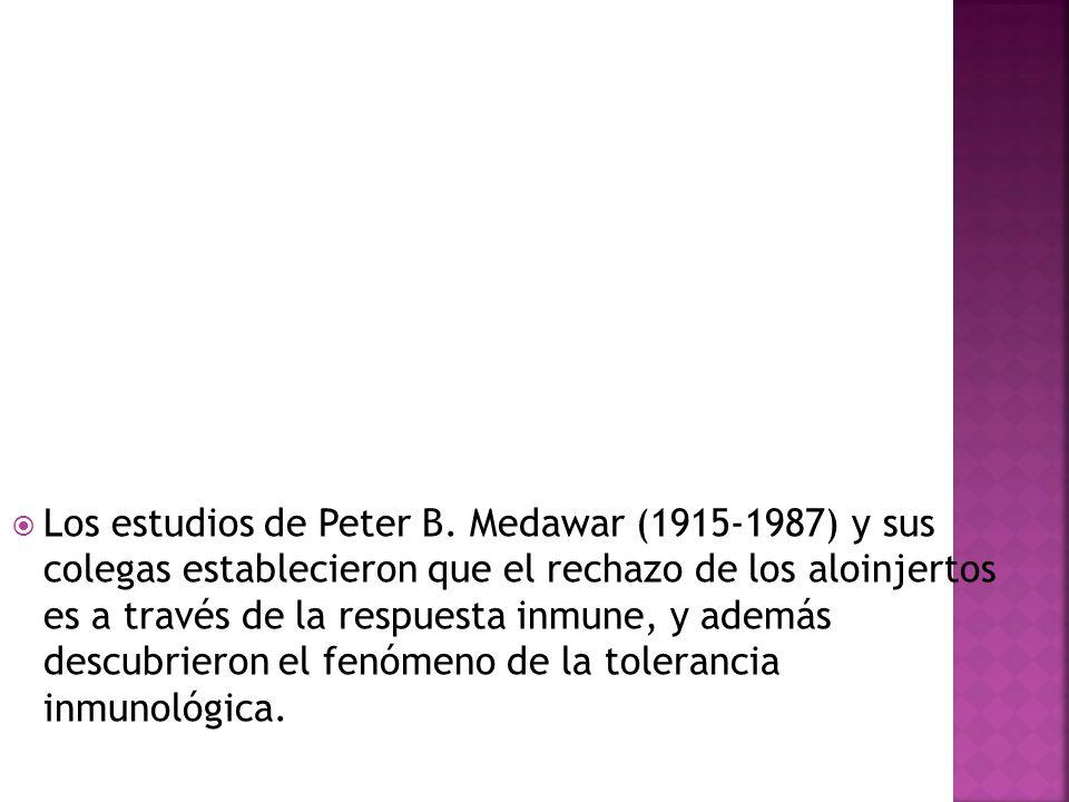 Los estudios de Peter B.