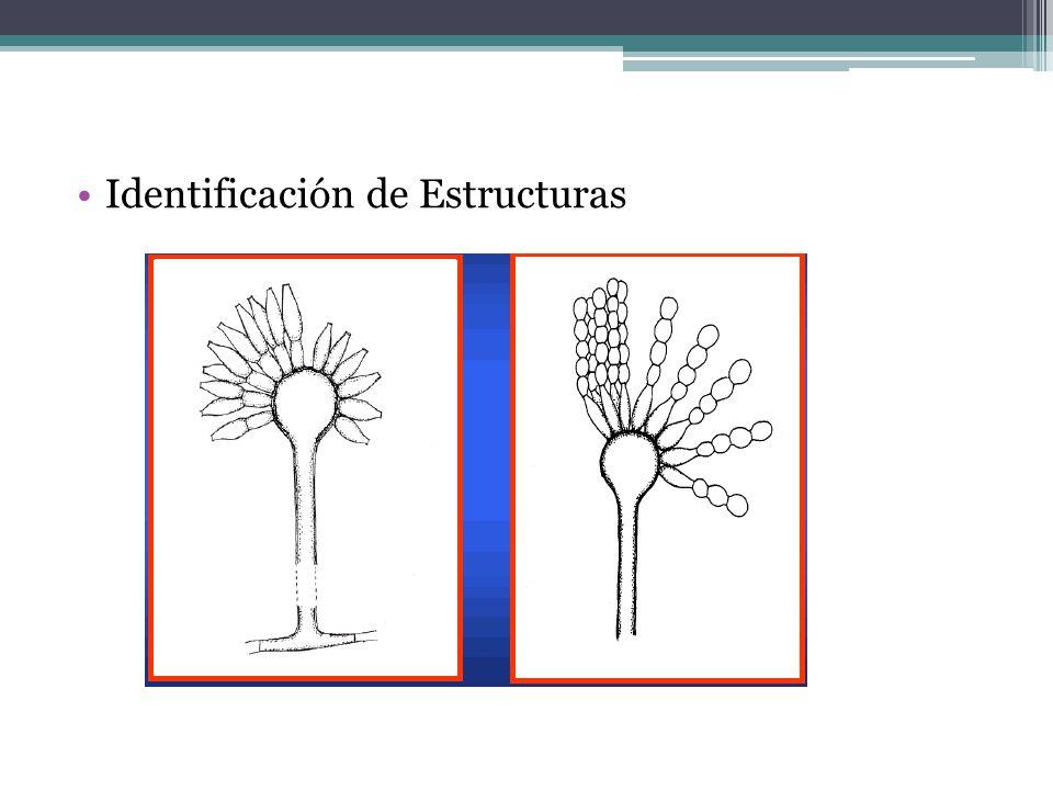 Identificación de Estructuras