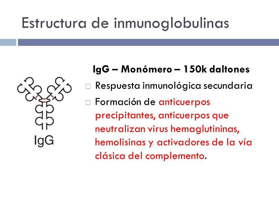 Estructura de inmunoglobulinas