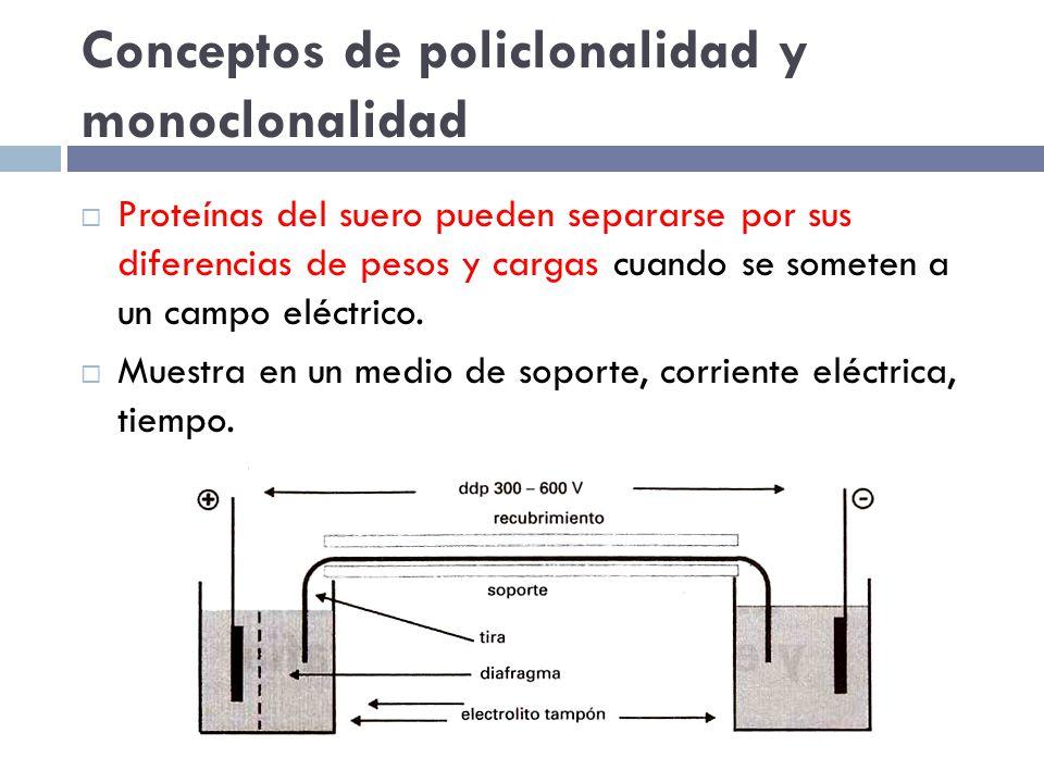 Conceptos de policlonalidad y monoclonalidad