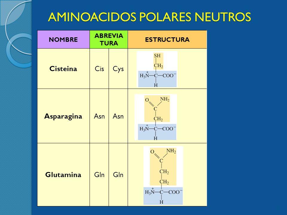AMINOACIDOS POLARES NEUTROS