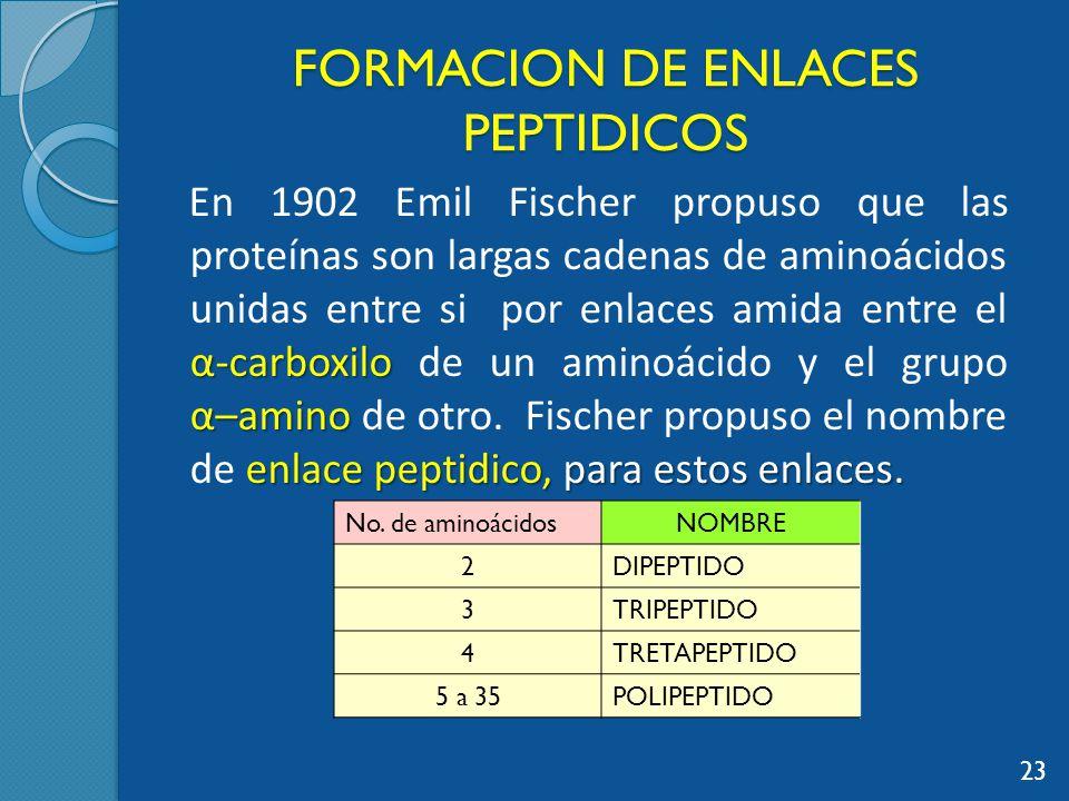 FORMACION DE ENLACES PEPTIDICOS