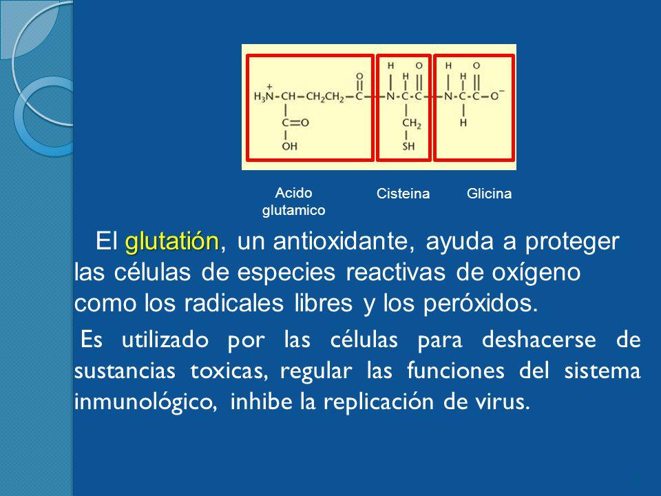 Acido glutamico Cisteina. Glicina.