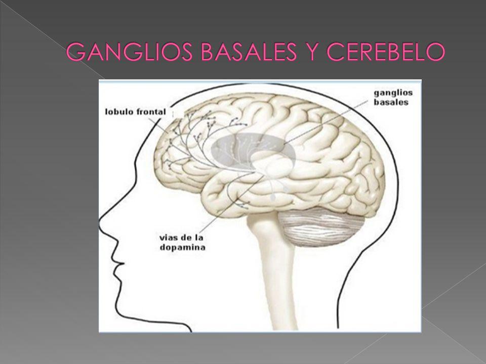 GANGLIOS BASALES Y CEREBELO