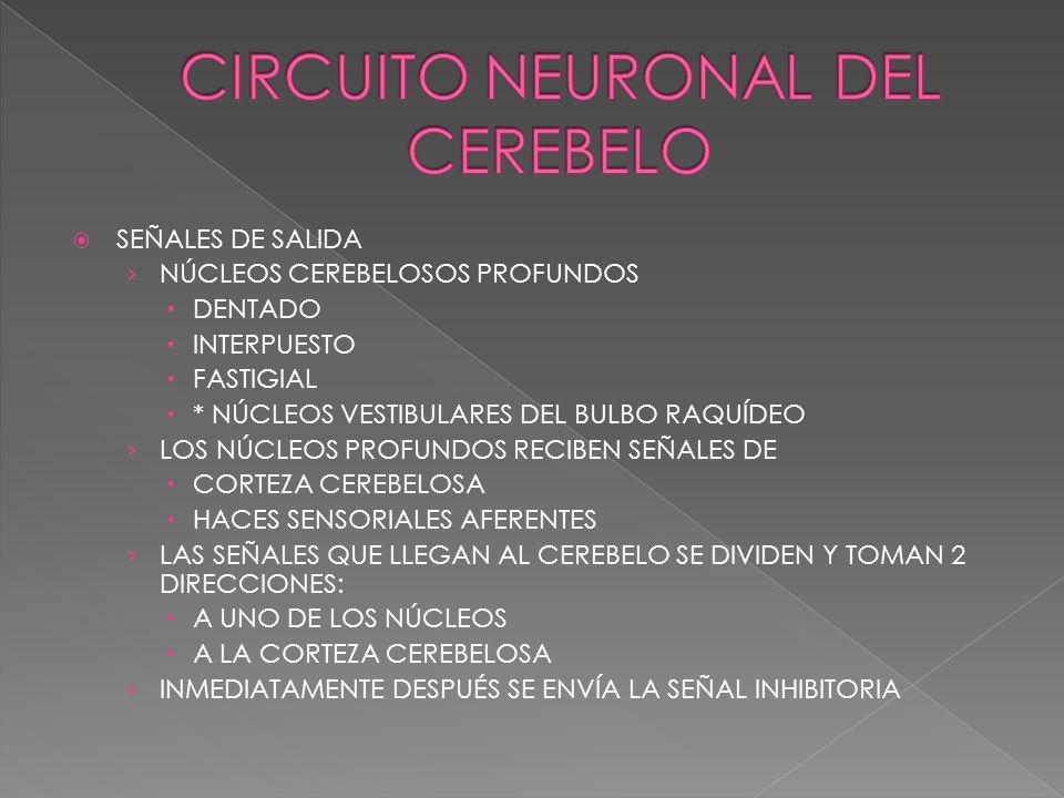 CIRCUITO NEURONAL DEL CEREBELO