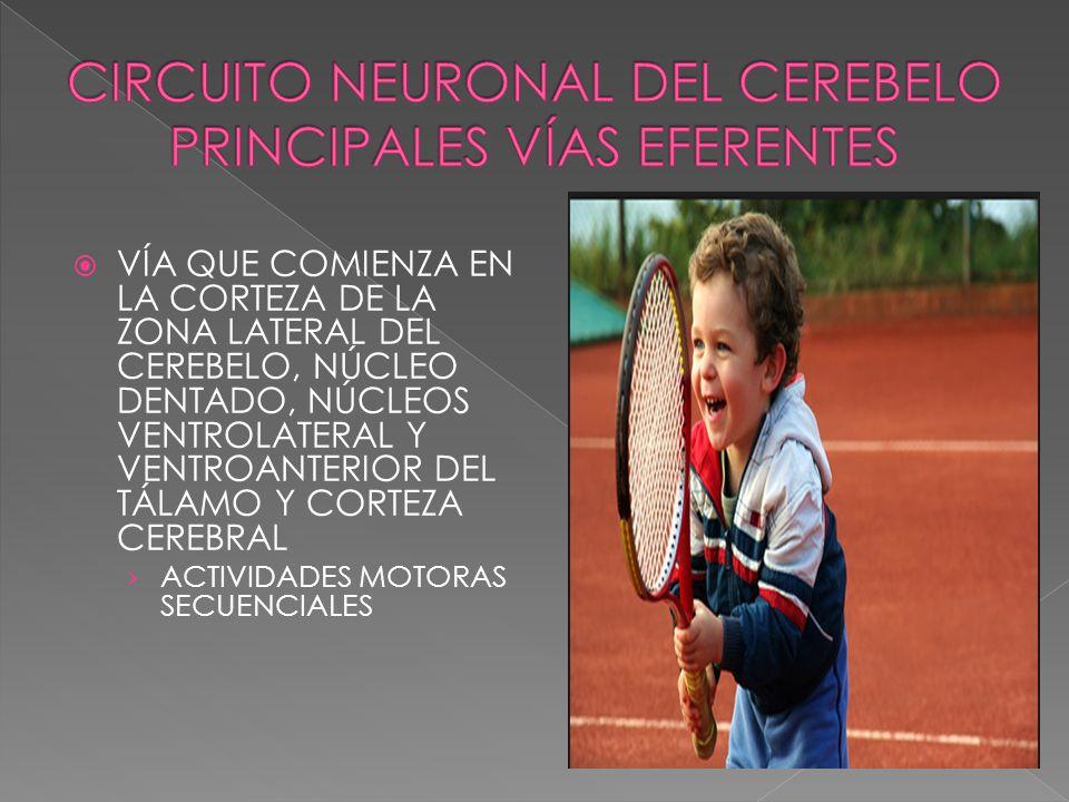 CIRCUITO NEURONAL DEL CEREBELO PRINCIPALES VÍAS EFERENTES