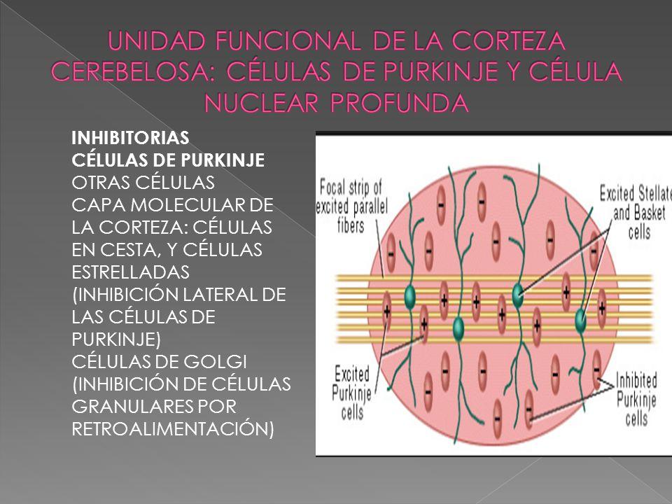 UNIDAD FUNCIONAL DE LA CORTEZA CEREBELOSA: CÉLULAS DE PURKINJE Y CÉLULA NUCLEAR PROFUNDA
