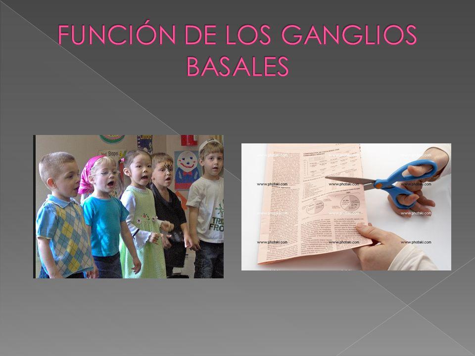 FUNCIÓN DE LOS GANGLIOS BASALES