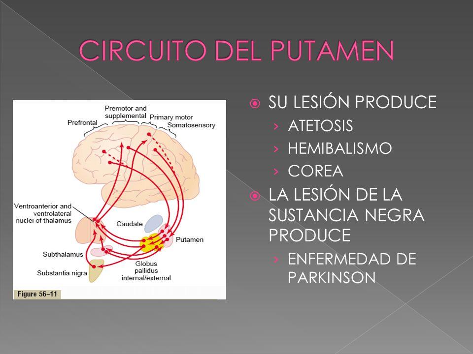 CIRCUITO DEL PUTAMEN SU LESIÓN PRODUCE