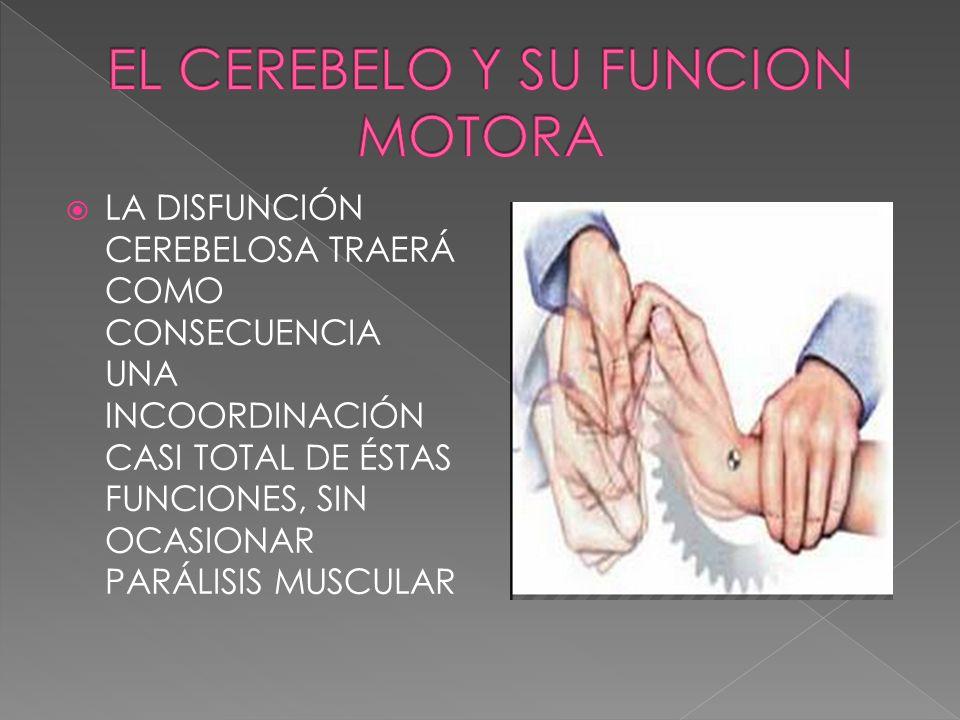 EL CEREBELO Y SU FUNCION MOTORA