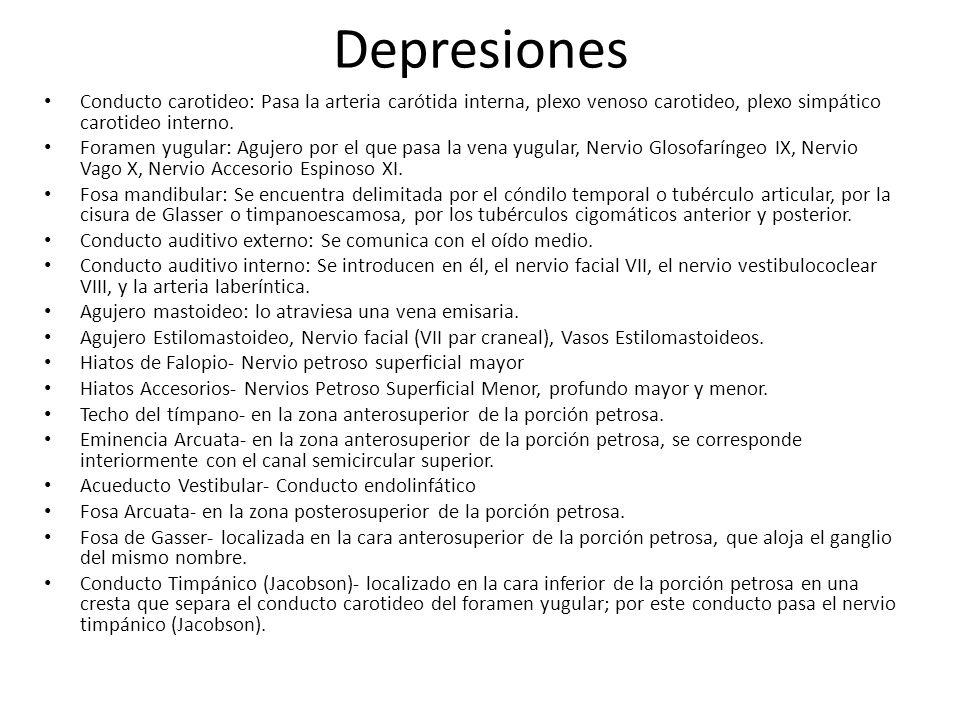Depresiones Conducto carotideo: Pasa la arteria carótida interna, plexo venoso carotideo, plexo simpático carotideo interno.