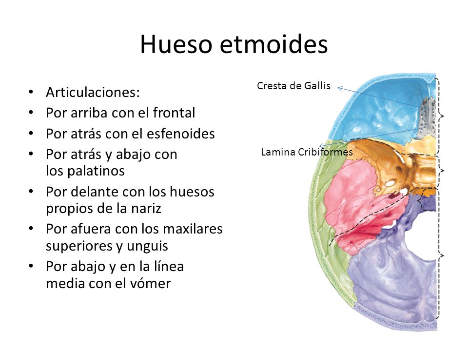 Hueso etmoides Articulaciones: Por arriba con el frontal