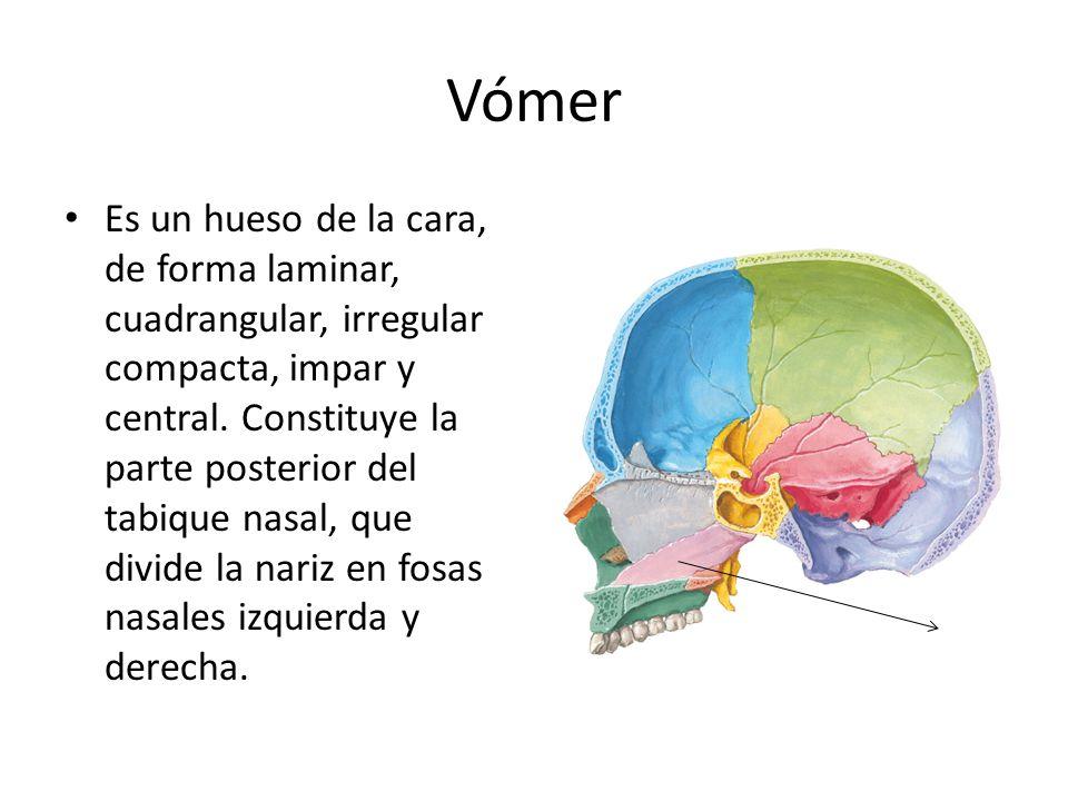 Vómer
