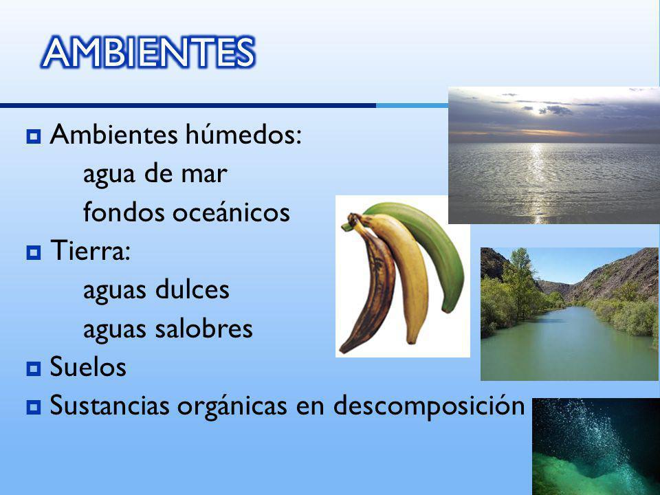 AMBIENTES Ambientes húmedos: agua de mar fondos oceánicos Tierra: