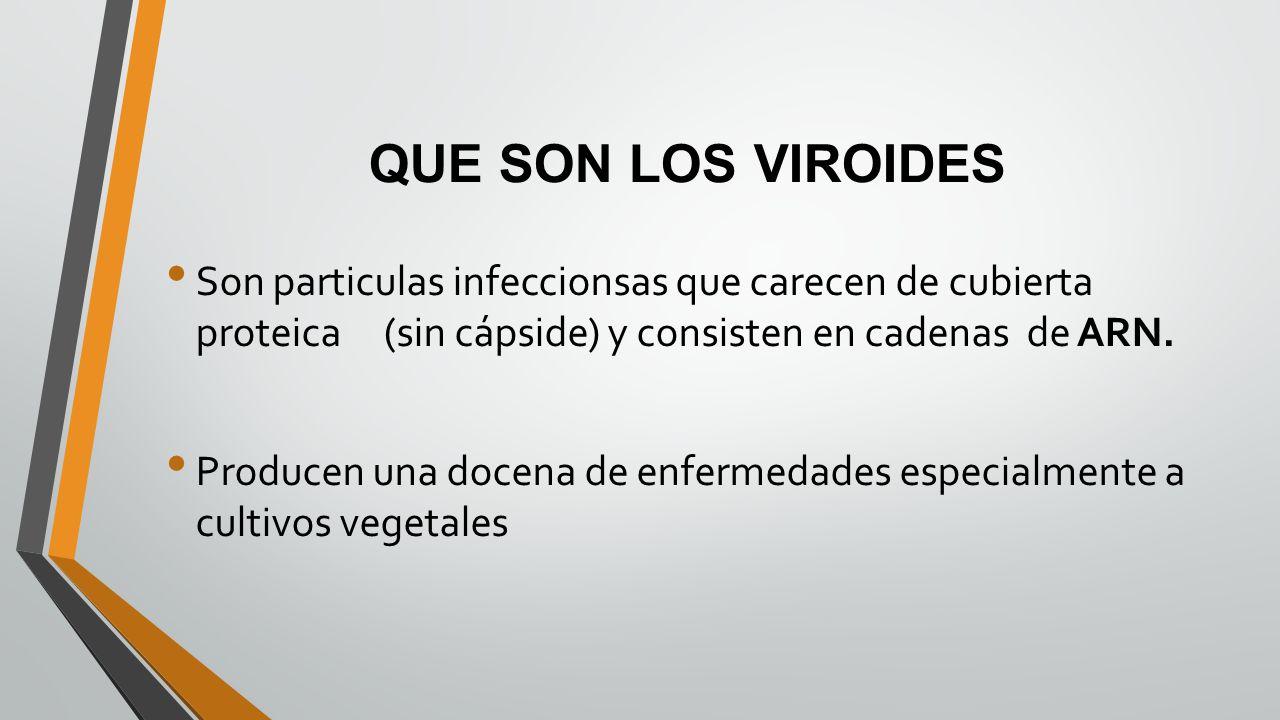 QUE SON LOS VIROIDES Son particulas infeccionsas que carecen de cubierta proteica (sin cápside) y consisten en cadenas de ARN.