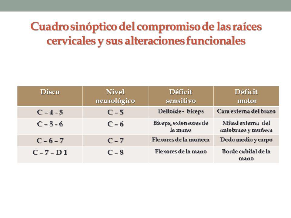 Cuadro sinóptico del compromiso de las raíces cervicales y sus alteraciones funcionales