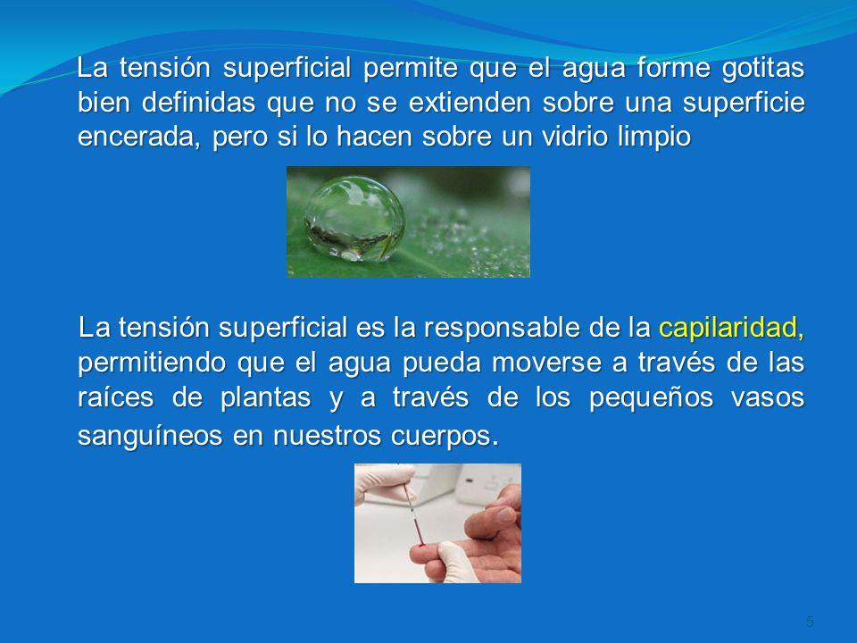 La tensión superficial permite que el agua forme gotitas bien definidas que no se extienden sobre una superficie encerada, pero si lo hacen sobre un vidrio limpio