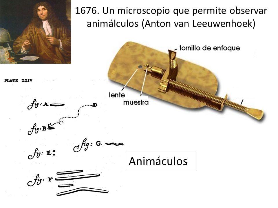 1676. Un microscopio que permite observar animálculos (Anton van Leeuwenhoek)