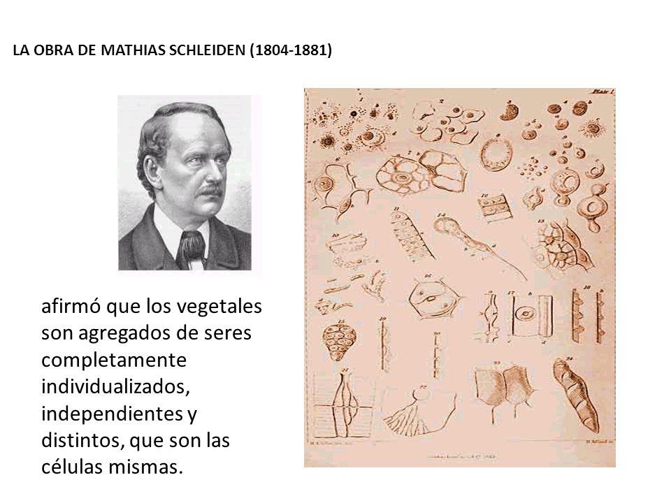 LA OBRA DE MATHIAS SCHLEIDEN (1804-1881)