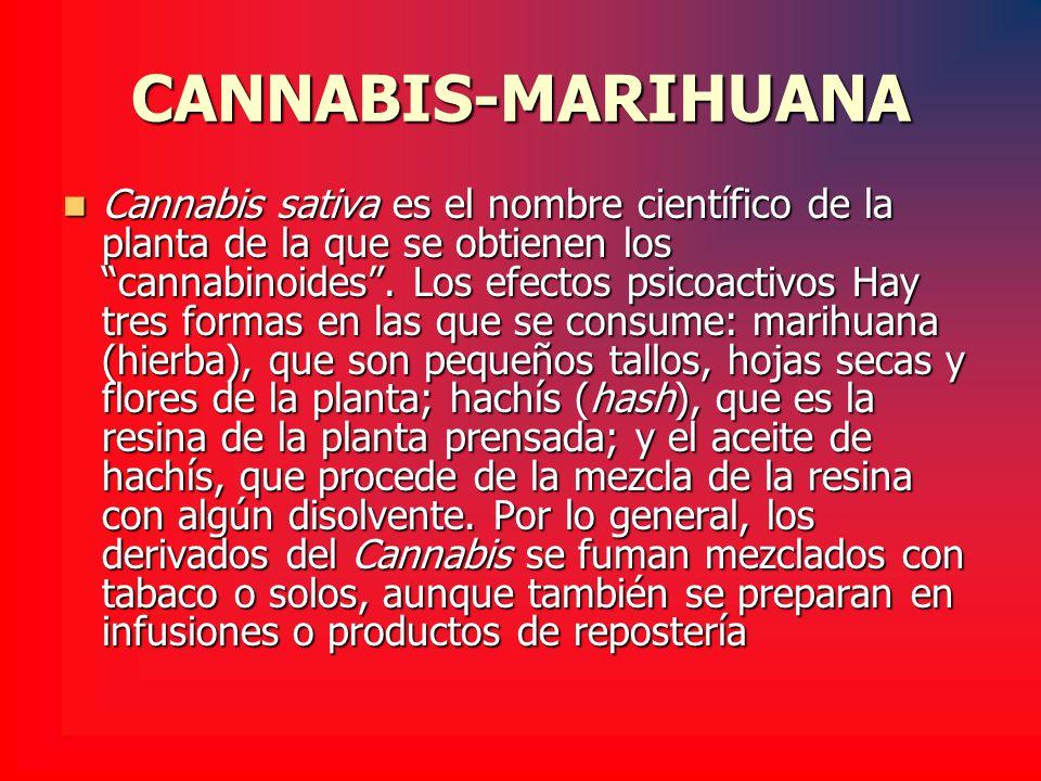 CANNABIS-MARIHUANA