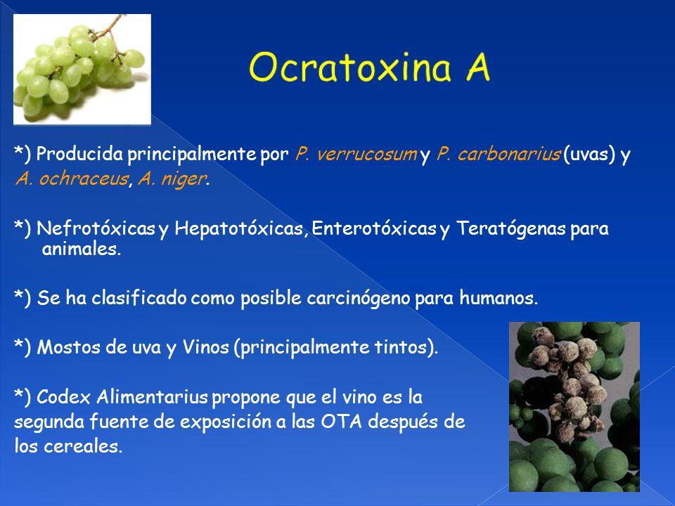 Ocratoxina A *) Producida principalmente por P. verrucosum y P. carbonarius (uvas) y. A. ochraceus, A. niger.
