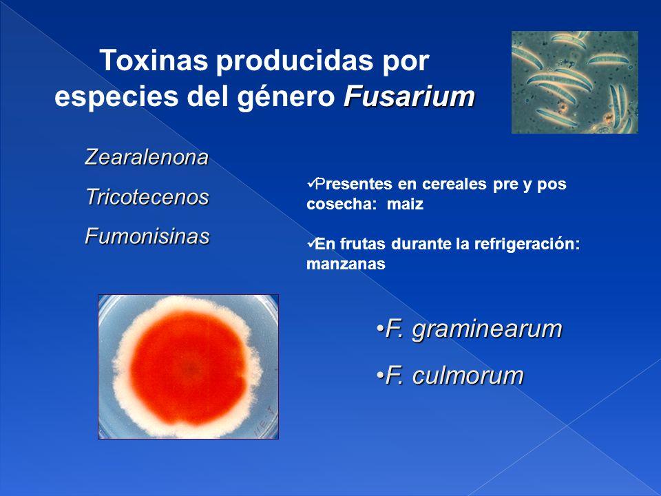 Toxinas producidas por especies del género Fusarium
