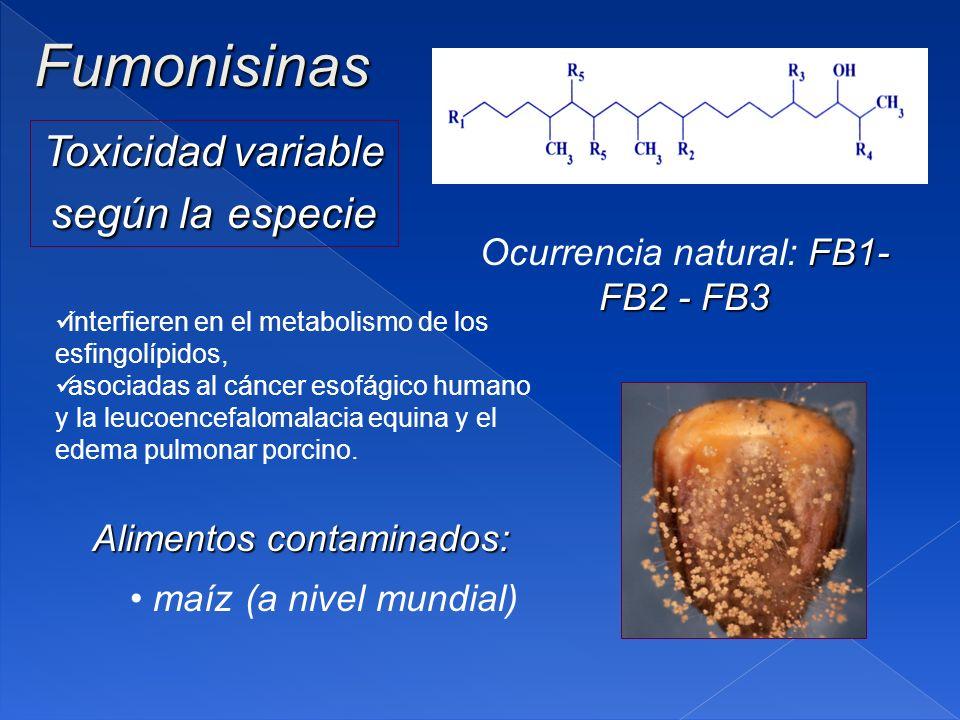 Fumonisinas Toxicidad variable según la especie