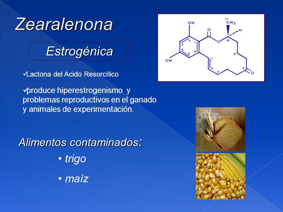 Zearalenona Estrogénica Alimentos contaminados: trigo maíz