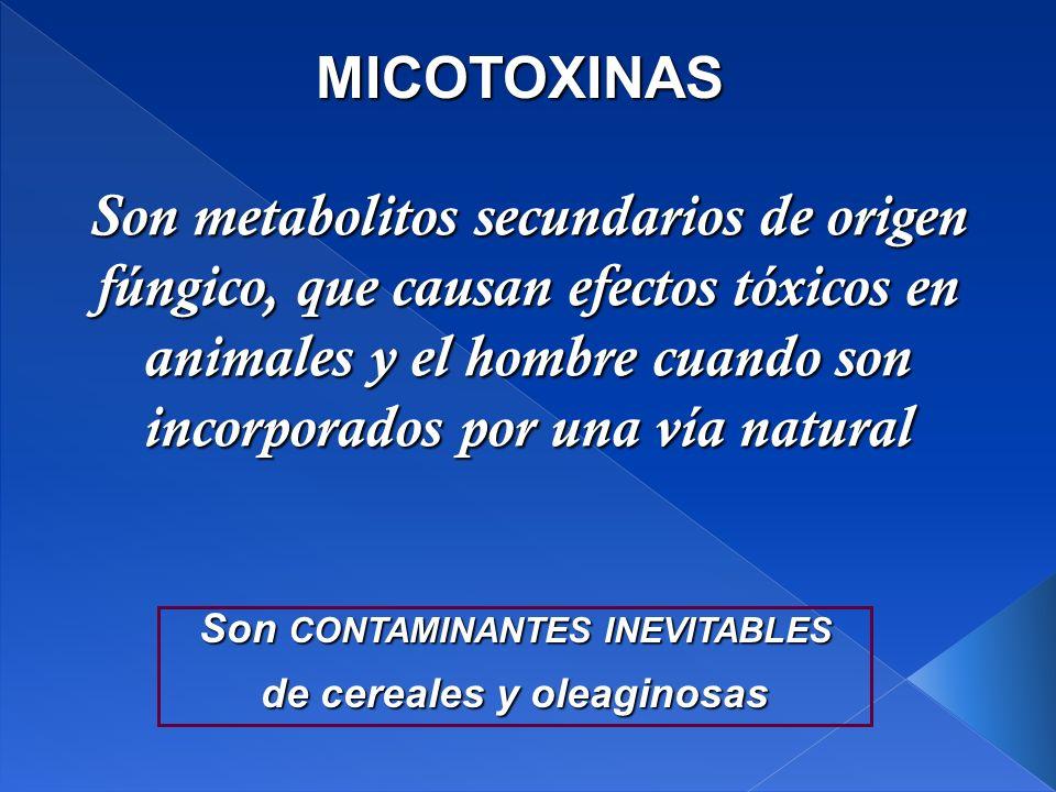Son CONTAMINANTES INEVITABLES de cereales y oleaginosas