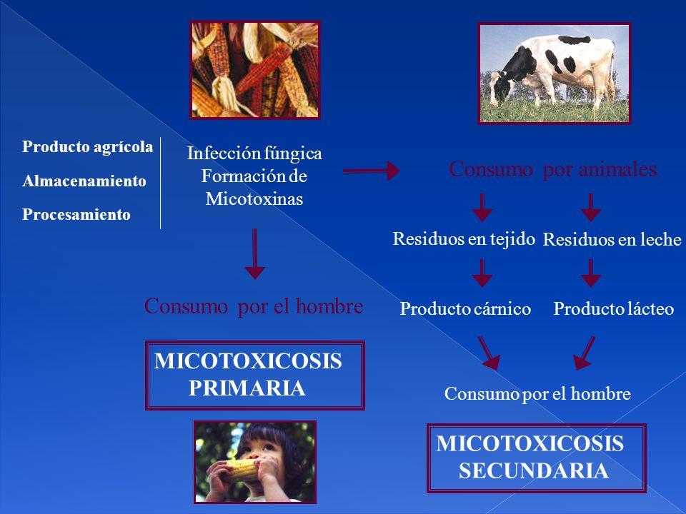 Infección fúngica Formación de Micotoxinas