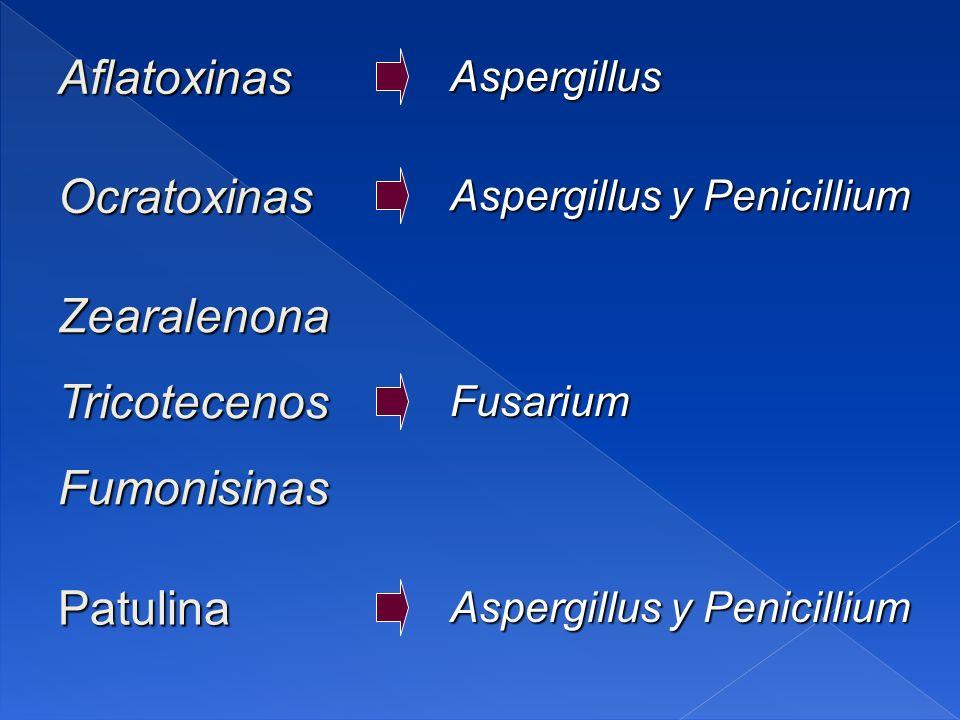 Aflatoxinas Ocratoxinas Zearalenona Tricotecenos Fumonisinas Patulina