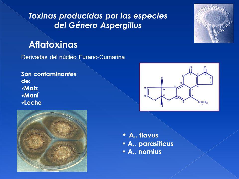 Toxinas producidas por las especies del Género Aspergillus