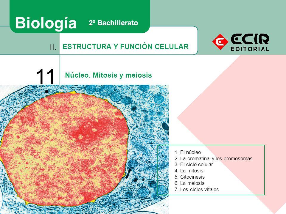 11 Biología II. 2º Bachillerato ESTRUCTURA Y FUNCIÓN CELULAR