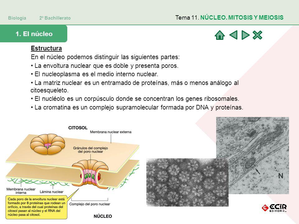 Biología 2º Bachillerato
