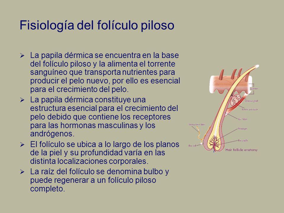 Fisiología del folículo piloso