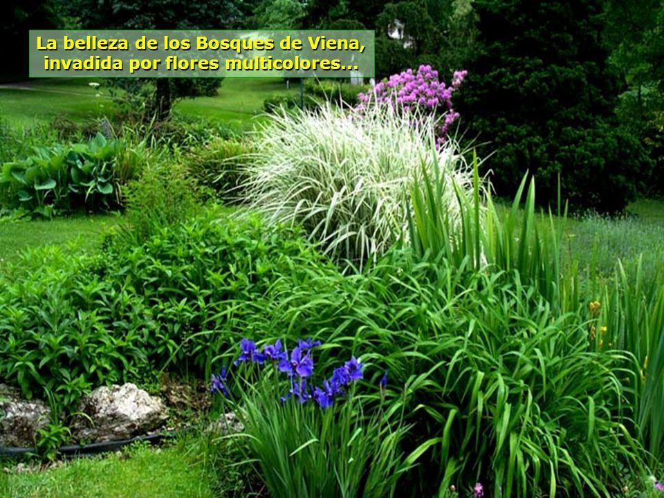 La belleza de los Bosques de Viena, invadida por flores multicolores...