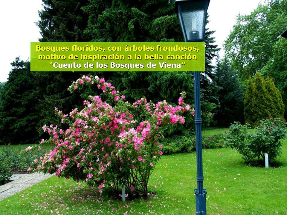 Bosques floridos, con árboles frondosos, motivo de inspiración a la bella canción Cuento de los Bosques de Viena