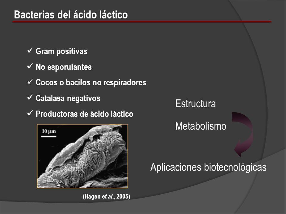 Bacterias del ácido láctico